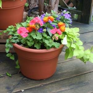 Mixed Patio Pot Plant (DESIGNER'S CHOICE SUBSTITUTION DOES NOT APPLY TO PLANTS) in North Adams, MA | MOUNT WILLIAMS GREENHOUSES INC
