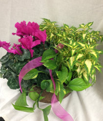 Mixed Plant Basket  Plants