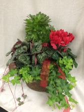 Plant - Mixed Plant Basket with Ivy Plants