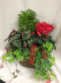 Mixed Plant Basket with Ivy Plants