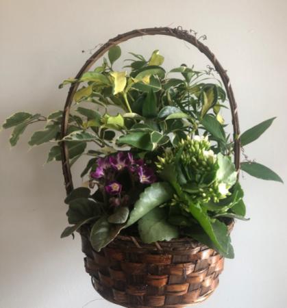 Mixed Plant Arrangement