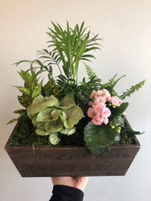 Mixed Planter (Dark Wash)  in Cambridge, ON | KELLY GREENS FLOWERS & GIFT SHOP