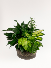 Mixed Green Plants in Metal Container Large Planter