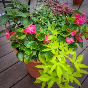 Assorted Planters Plant in Farmville, VA | Rochette's Florist