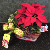 Mixed Poinsettia Basket Plant