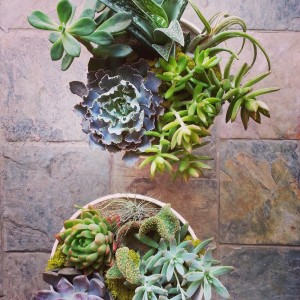 Doja Succulent & Cacti Planter  in Toronto, ON | BOTANY FLORAL STUDIO