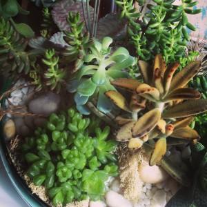 Newport Succulent Planter