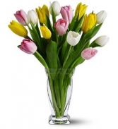WF 328  Mixed Tulips