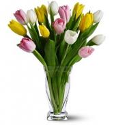WF 328  Mixed Tulips