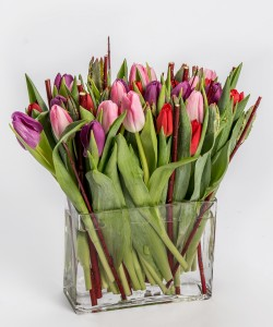 Twiggy Tulips Vased Arrangement, Compact Mixed Tulips and branches
