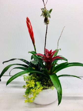Modern Bromelaid Arrangement  Plants