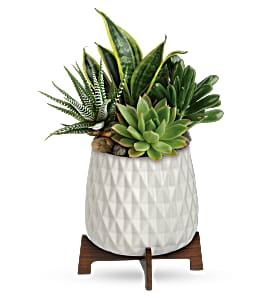 Modern Mood Succulent Garden Every Day in International Falls, MN | Gearhart's Floral And Gifts