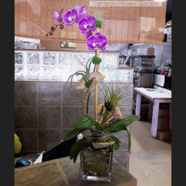 Modern Orchid Plant With An Organic Twist