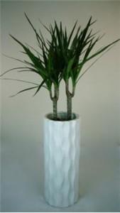 Modern Plant (Dracaena Marginata)