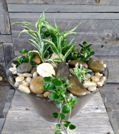 Modern Potted Garden Plants