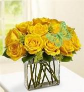 Modern Roses - 1 DZ Yellow All Around