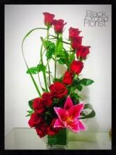 Modern Roses Roses
