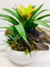 Modern Succulent and Bromelaid Arrangement Plants