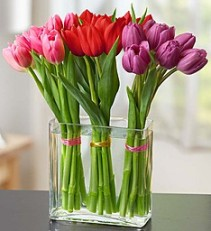 Modern Tulips  Seasonal Favorite! (Colors may vary)