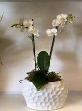 Modern White Orchid - small