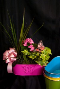 Mom's Butterfly Window Box Dish garden in Corner Brook, NL | The Orchid