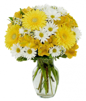 Mom's Daisy's EXCLUSIVELY AT MOM & POPS in Ventura, CA | Mom And Pop Flower Shop