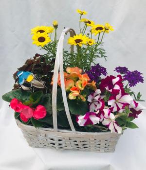 Garden Basket Planter Basket in Coleman, WI   COLEMAN FLORAL & GREENHOUSES