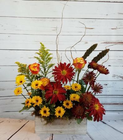 Moms Garden In Fall
