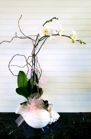 Mom's Orchid Garden in a Shell EXCLUSIVELY AT MOM & POPS in Oxnard, CA | Mom and Pop Flower Shop