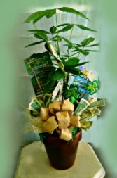 Money Tree For Dad Or Grad