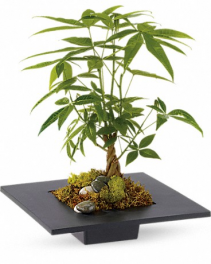 Money Tree Arrangement