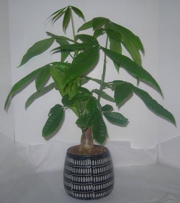 Money Tree in Ceramic