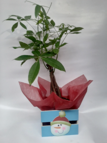 Money tree plant Santa gift