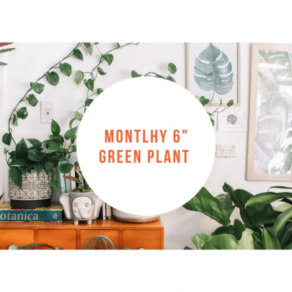 Monthly Green Plant  Subscription