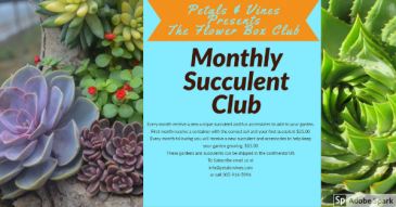 Monthly Subscription Succulent Club Succulent & Container