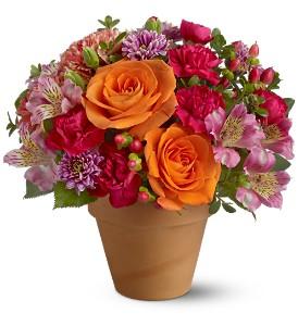 Morning in Sorrento - 426 Flower arrangement