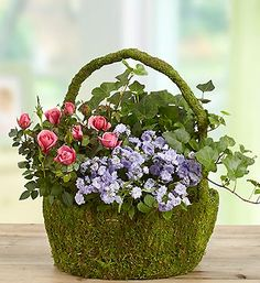 Moss Basket mixed blooming and green plants in Northport, NY | Hengstenberg's Florist
