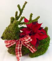 Mossy Reindeer