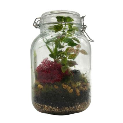 Mossy Terrarium