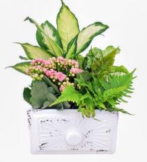 Mother of Pearl Garden Planter
