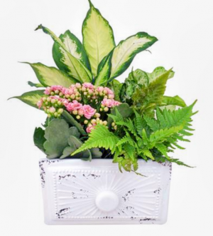 Mother of Pearl Garden Planter in Chatham, NJ | SUNNYWOODS FLORIST