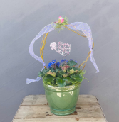 Mother's 6 Inch African Violet