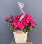 Mother's 8 Inch Azalea In Basket