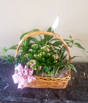 Mom & Pop's Basket 6 Exclusively at Mom & Pops in Ventura, CA | Mom And Pop Flower Shop