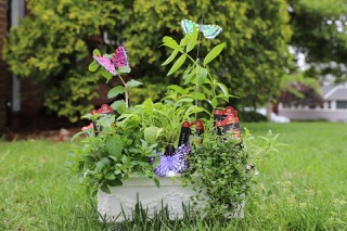 Mother's Day Herb Garden live plants