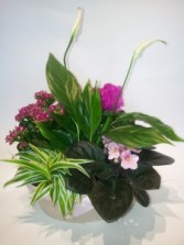 MOTHER'S DAY PLANTER Mixed indoor flowering and tropical plants