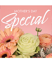 Mother's Day Special Designer's Choice in Conneaut, Ohio | MORRIS FLOWERS & GIFTS