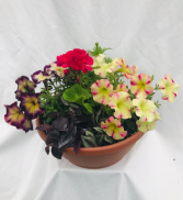 Garden Bowl Planter