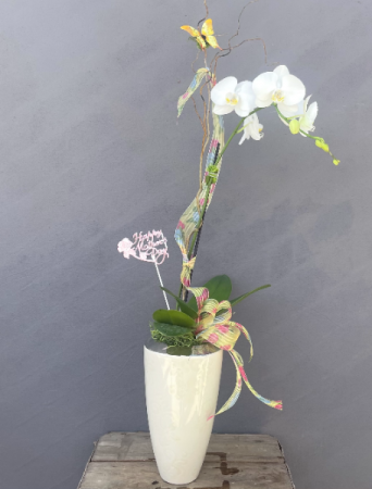 Mother's White Orchid