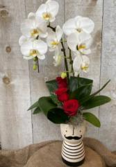 Mr. Valentine Orchid Plant and Flowers